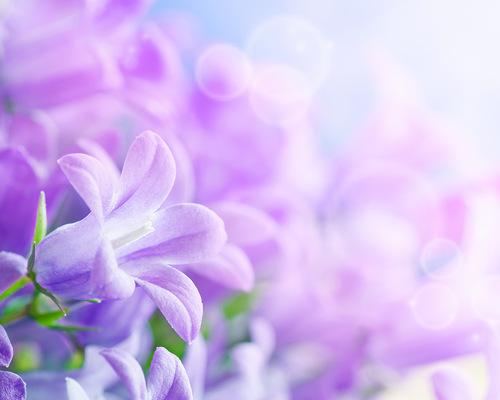 фіолет (500x400, 46Kb)