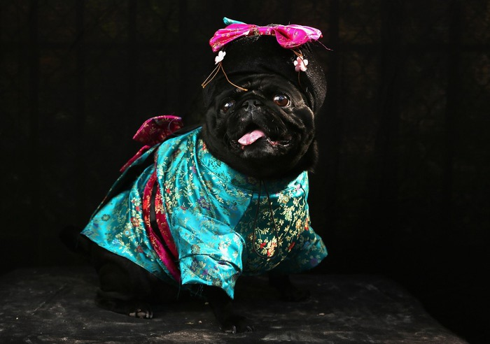 Dogs-Dress-Up-22 (700x492, 69Kb)