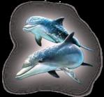 Превью дельфины на прозрачном слое (8) (229x213, 64Kb)