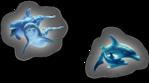 Превью дельфины на прозрачном слое (21) (547x304, 124Kb)