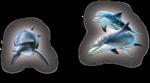 Превью дельфины на прозрачном слое (23) (472x262, 104Kb)