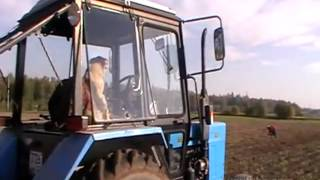 Уборка урожая по-русски