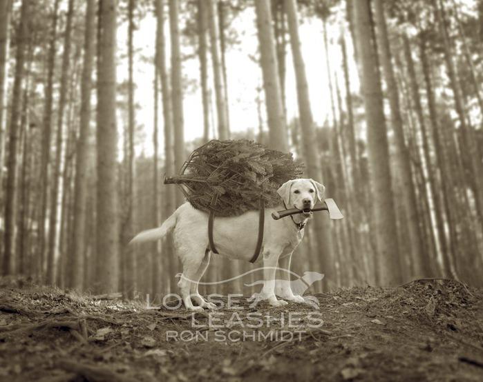 прикольные фото собак Рон Шмидт 2 (700x554, 101Kb)