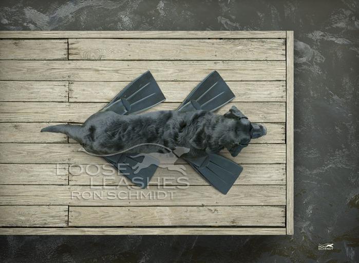 прикольные фото собак Рон Шмидт 4 (700x512, 110Kb)