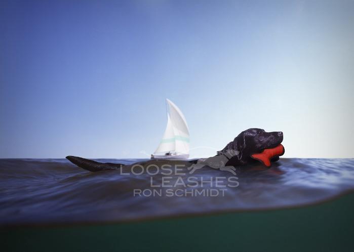 прикольные фото собак Рон Шмидт 6 (700x498, 35Kb)