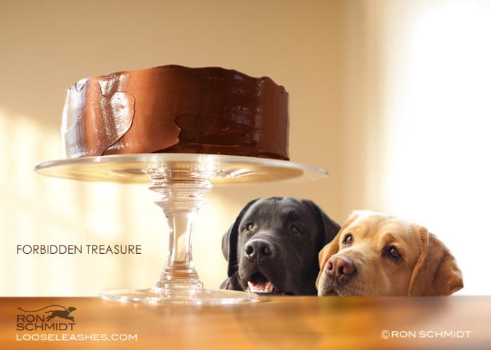 прикольные фото собак Рон Шмидт 7 (700x499, 135Kb)