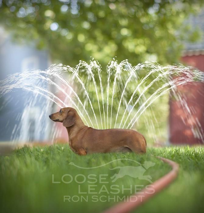 прикольные фото собак Рон Шмидт 8 (670x700, 98Kb)