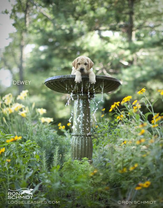 прикольные фото собак Рон Шмидт 10 (548x700, 260Kb)