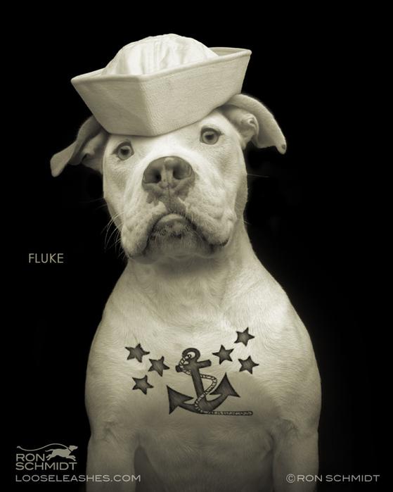 прикольные фото собак Рон Шмидт 11 (559x700, 113Kb)