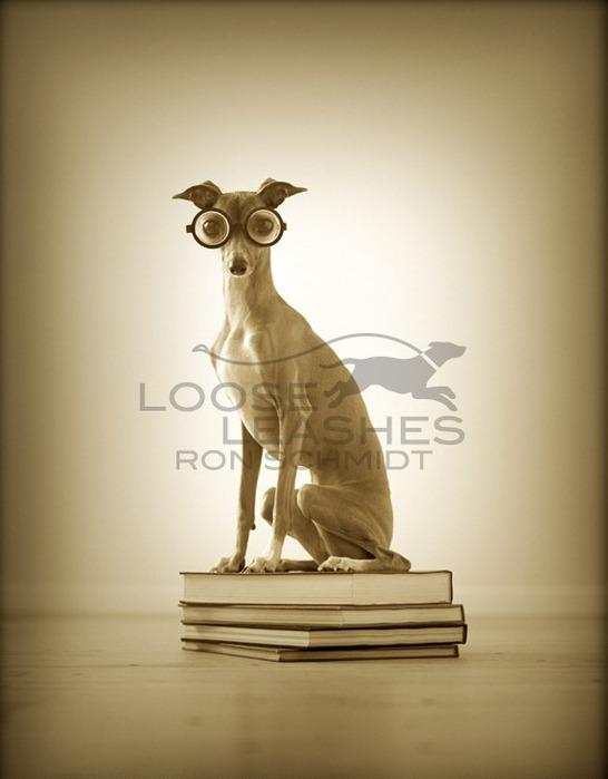 прикольные фото собак Рон Шмидт 12 (546x700, 53Kb)