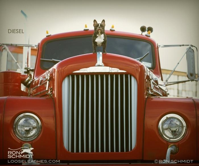 прикольные фото собак Рон Шмидт 16 (700x584, 131Kb)
