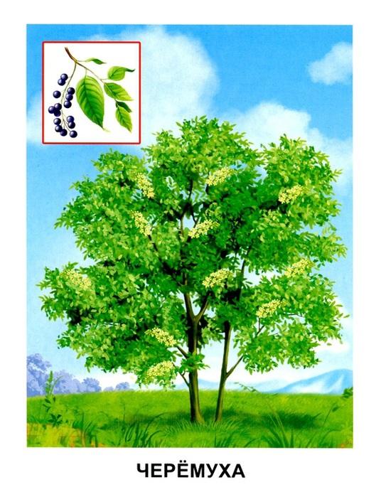 Деревья3 (536x700, 149Kb)