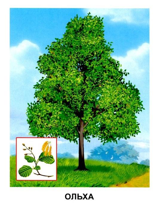 Деревья4 (539x700, 151Kb)