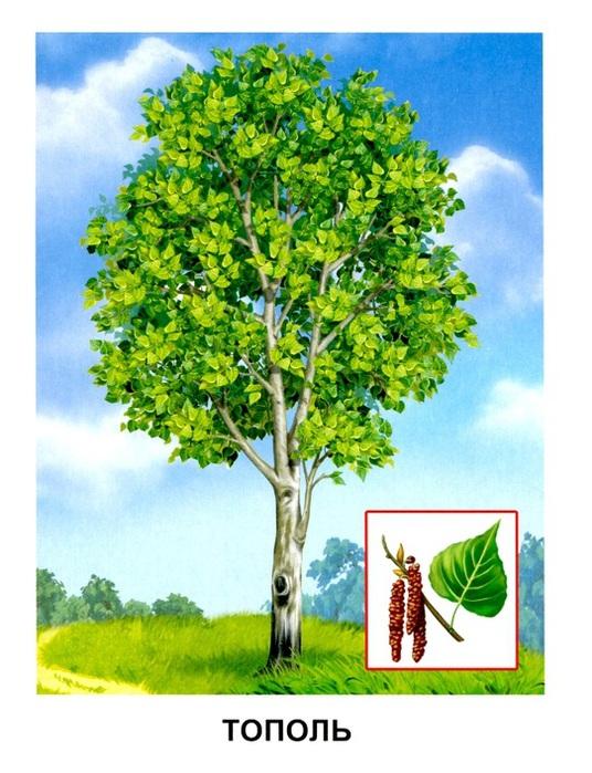 Тема деревья и кустарники