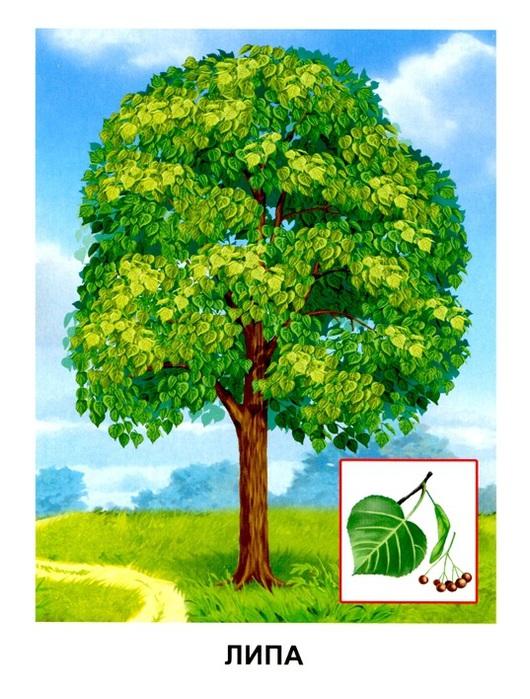Деревья6 (530x700, 153Kb)