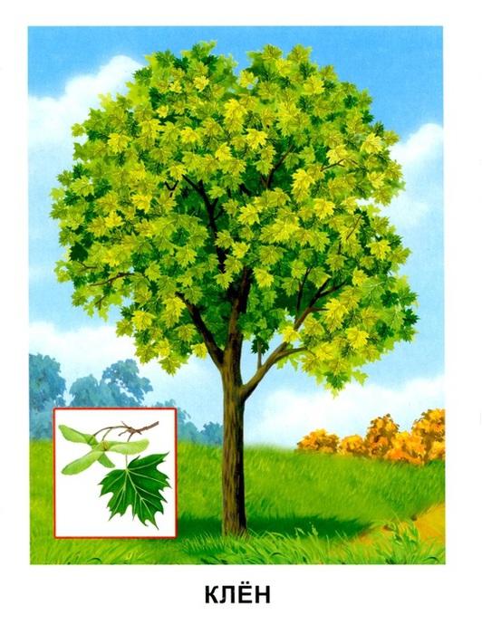 Деревья8 (532x700, 146Kb)