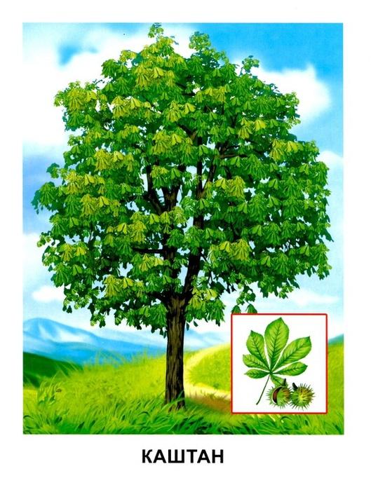 Деревья9 (529x700, 157Kb)