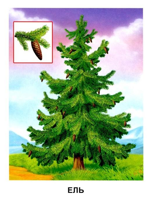Деревья13 (532x700, 137Kb)