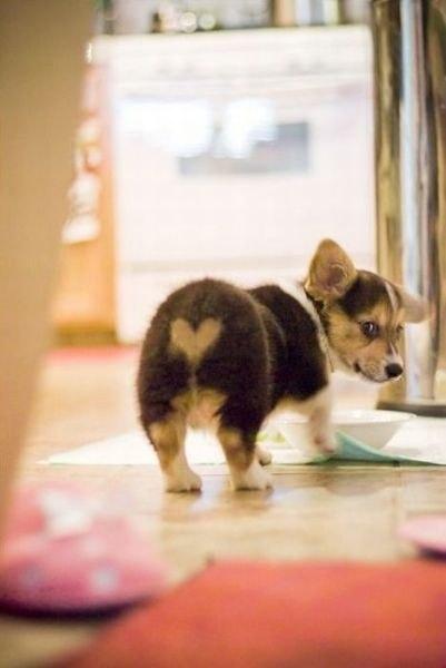 Животные с сердечками самое