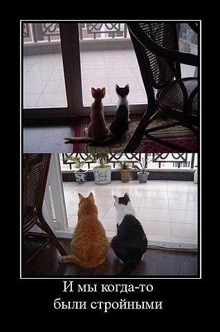 Демотиваторы с котами и другими