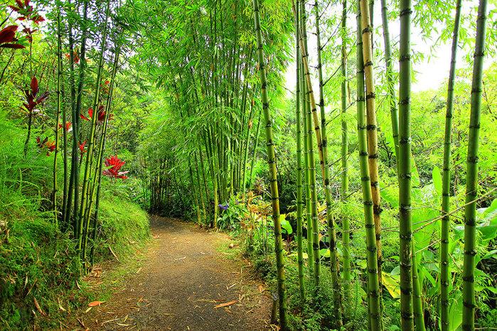сады острова мауи фото 3 (700x466, 250Kb)