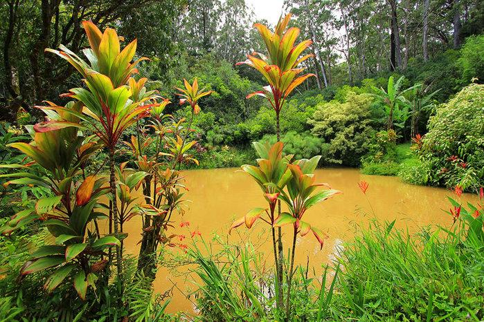 сады острова мауи фото 5 (700x466, 204Kb)