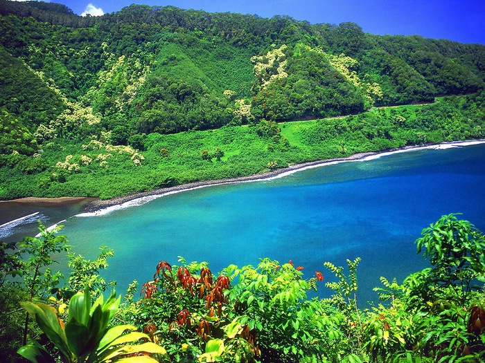 сады острова мауи фото 7 (700x525, 230Kb)