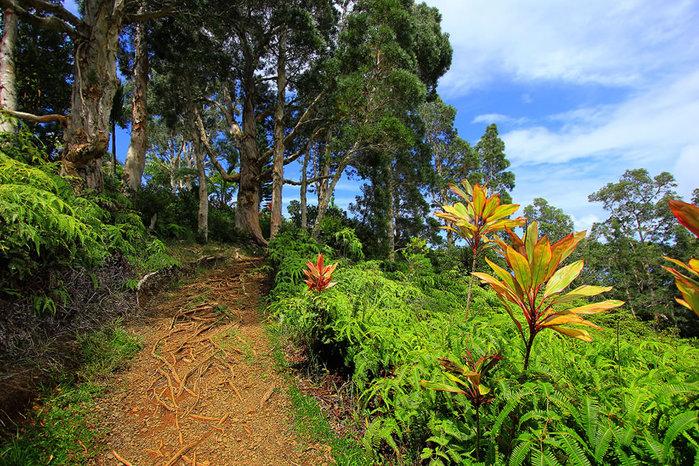 сады острова мауи фото 9 (700x466, 194Kb)