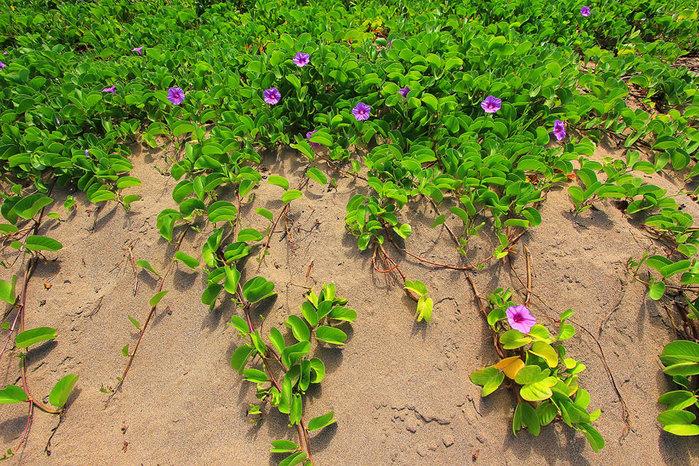 сады острова мауи фото 11 (700x466, 204Kb)