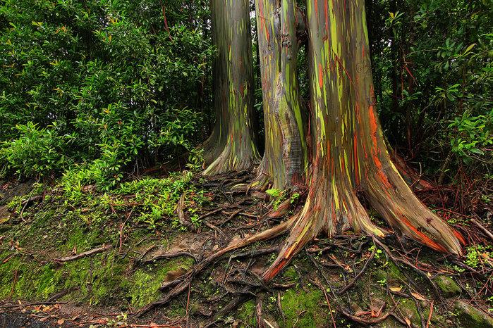 сады острова мауи фото 15 (700x466, 212Kb)