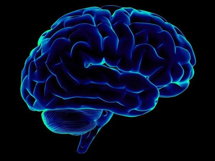 мозг (700x525, 47Kb)