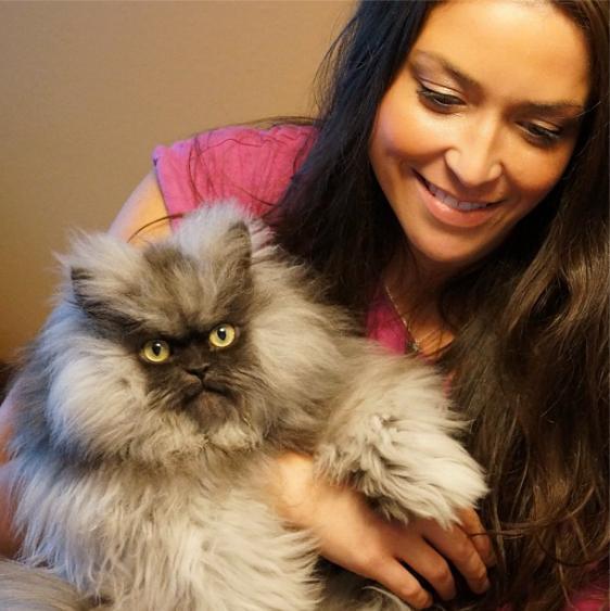 смешные коты фото/4171694_polkovnik_myay_foto_prikolnie_koshki (562x563, 43Kb)