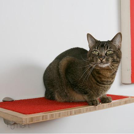4497432_wallshelvesandcat (436x436, 18Kb)