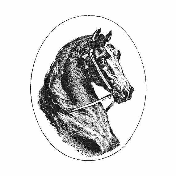Картинки для декупажа лошади черно белые