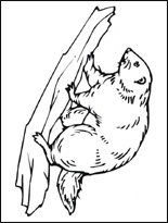 beaver-s (155x205, 28Kb)