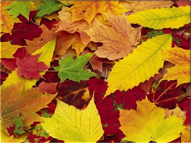 autumn-leaves-backgrounds-new-york-pictures (612x459, 72Kb)
