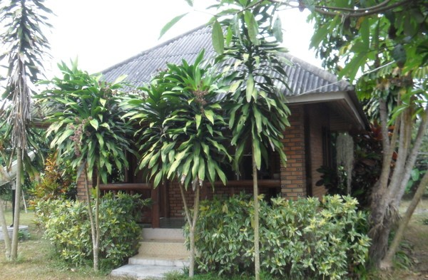 Chiang Dao1 (600x393, 93Kb)