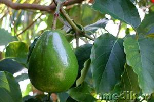 polza-avokado-2 (300x200, 31Kb)