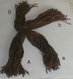 hair2 (240x260, 9Kb)