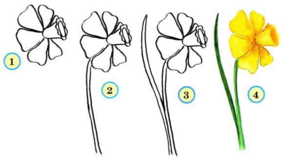Схема рисования цветов