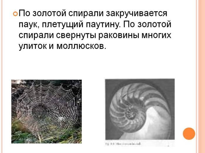 3726295_0010010Pozolotojspiralizakruchivaetsjapaukpletuschijpautinu (700x525, 43Kb)