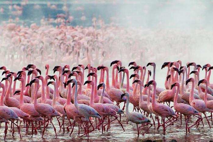 thumb_Nakuru_-_ozero_rozovyih_flamingo_11 (700x466, 67Kb)