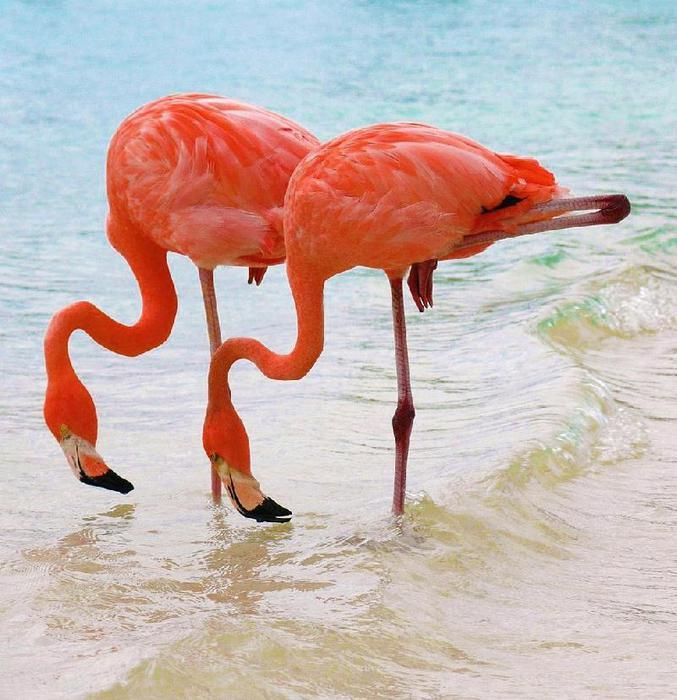 thumb_Nakuru_-_ozero_rozovyih_flamingo_23 (677x700, 72Kb)