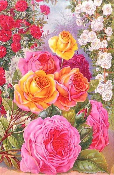 rose8 (400x615, 88Kb)