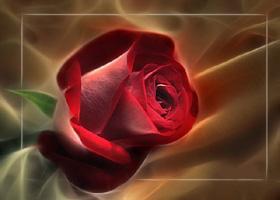 роза-обр (280x200, 22Kb)