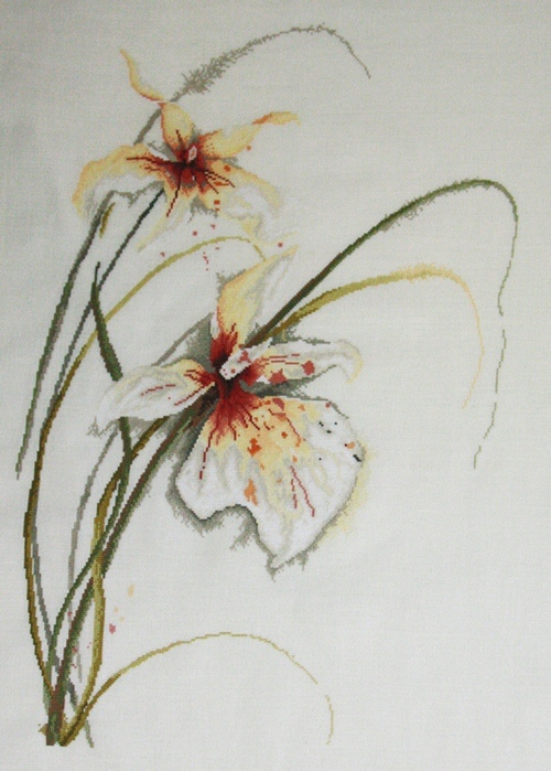orhideja-Lanarte (500x700