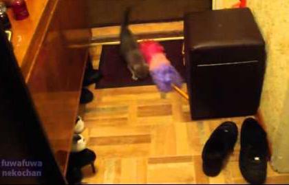 Котенок играет с метелкой /3518263_kk_1_ (420x269, 108Kb)