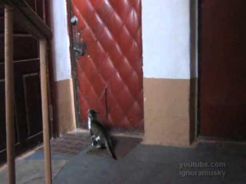 Кот пришел домой видео/3518263_k (480x360, 10Kb)