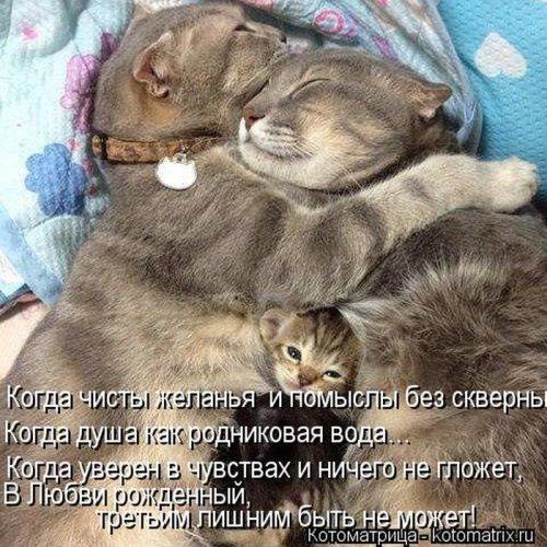 1352277570_1351869810_bestkotomatrixofthe0211week18 (500x500, 85Kb)