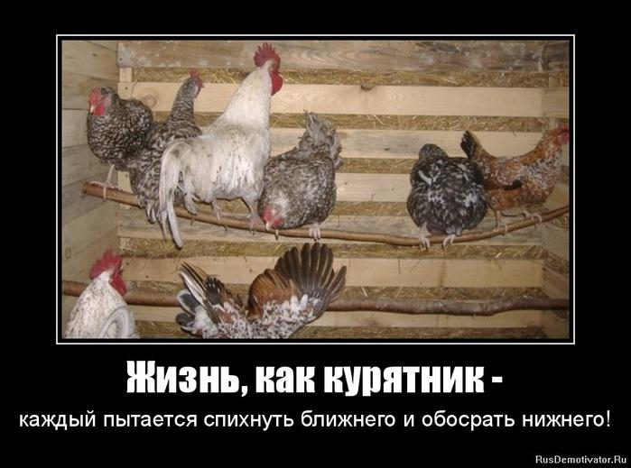 1319923747-zhizn-kak-kuryatnik- (700x519, 109Kb)